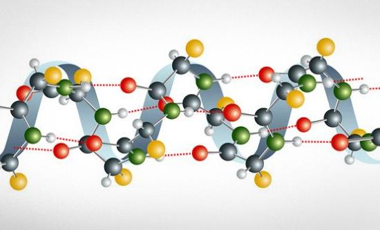 produkty-soderzhashhie-aminokisloty2